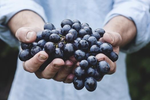 Une loi pour introduire les produits bio dans les cantines