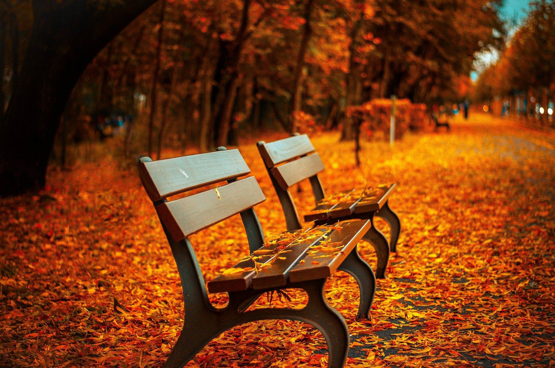 Bancs urbains au milieu d'un parc en automne au milieu de feuilles d'abres oranges tombées sur le sol